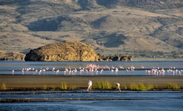 Flamants rose dans l'eau dans le site patrimoniale de l'UNESCO de Ngorongoro en safari en Tanzanie