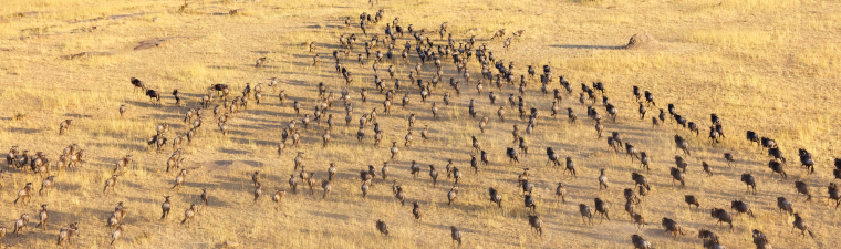 Parc National de Tarangire en safari en Tanzanie en Afrique