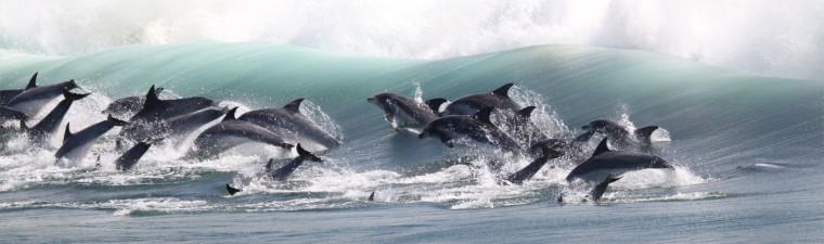 Plage de Dolphin Point avec les dauphins à Knysna en voyage en Afrique du Sud