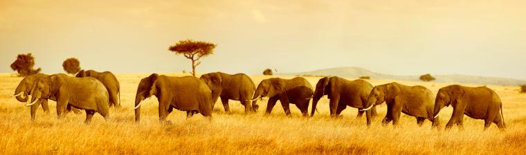 Éléphants dans un safari en 4x4 à Kruger en voyage en Afrique du Sud