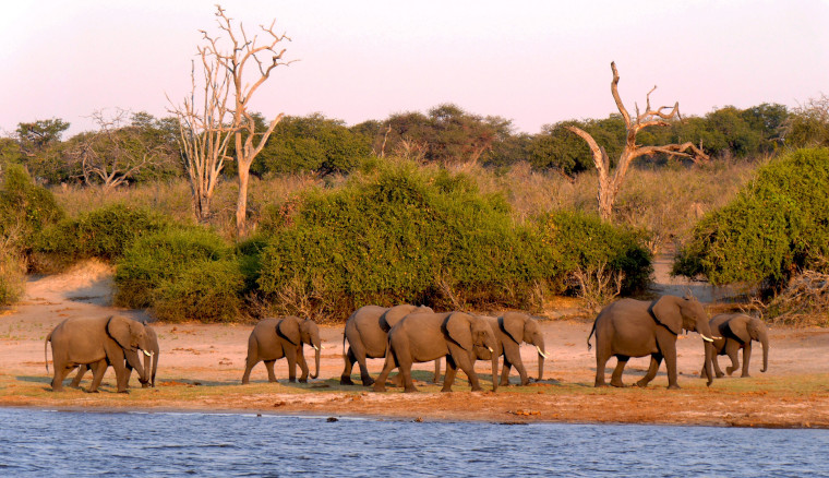 One Week Exclusive Botswana Guided Tour with Charter Flights