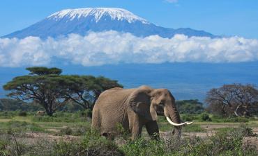 Classic Kenya Safari Best rate 11 nights