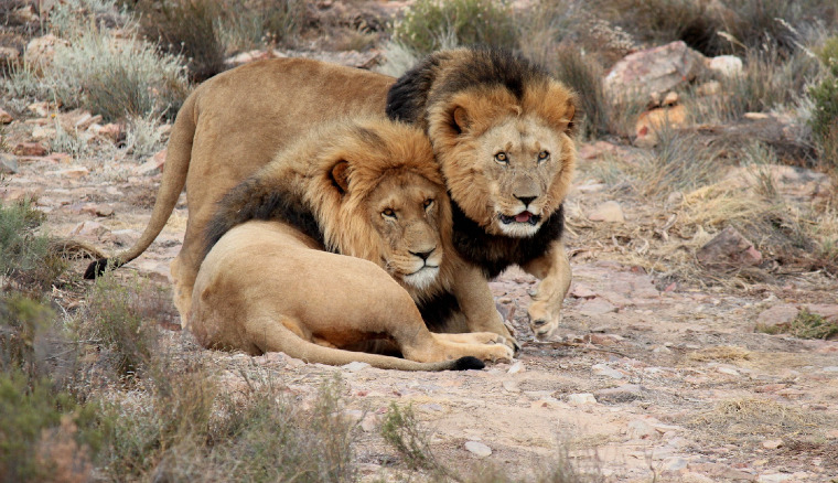 Best Johannesburg Mandela and Lion Park Tour Package
